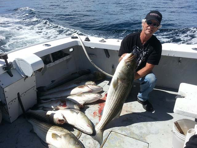 stripers caught on Old Salt fishing charters